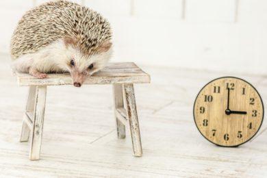時計とハリネズミ